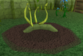 Red vine blossom3.png