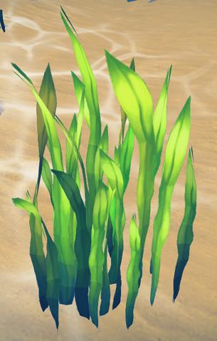 File:Seaweed (Aquarium) built.png
