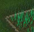 Snape grass5.png