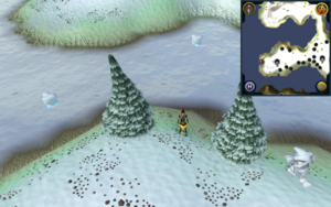 Scan clue Fremennik Isles north between 2 Arctic Pines on south-west snowy island