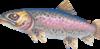 Leaping trout (Aquarium)