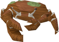 Giant crab (red and green) pet