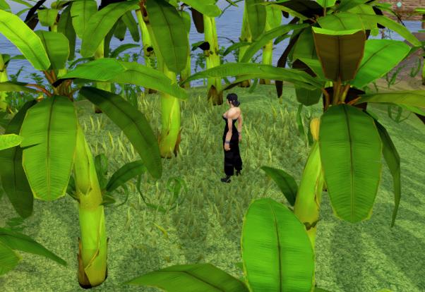 File:Picking bananas.png