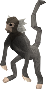 Monkey (grey and white) pet