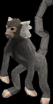 Monkey (grey and white) pet