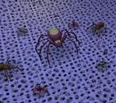 Spider Court
