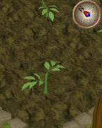 File:Tomato1.png