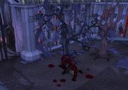 Darkmeyer bloodwood tree