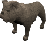 Bulldog (grey) pet