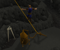 Dorgesh-Kaan agility 7.png