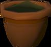 Elder seedling detail