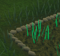 Snape grass3.png
