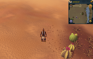 Compass clue south-western desert east of Exiled Kalphite Hive entrance