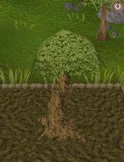 Spirit tree8