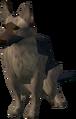 Lumbridge guard dog.png