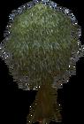 Dramen tree