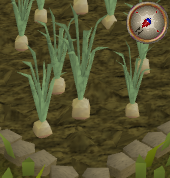 File:Onion5.png
