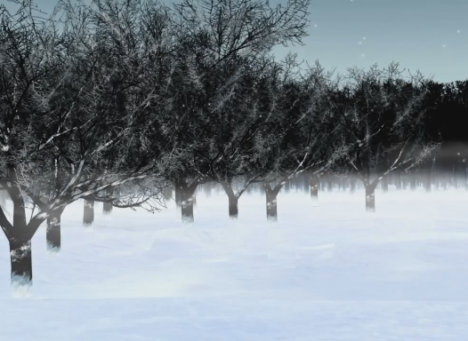 File:Snowy Forest.png