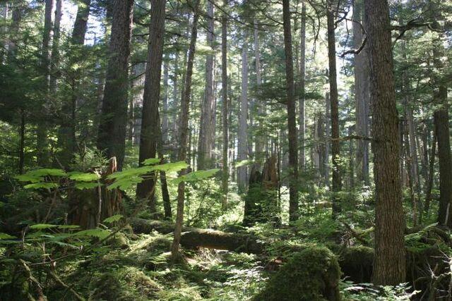 File:Fungwood-trees.jpg