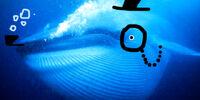 Blubbers Baleen