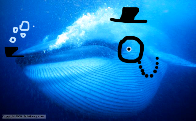 File:Blue whale 1 copy.jpg