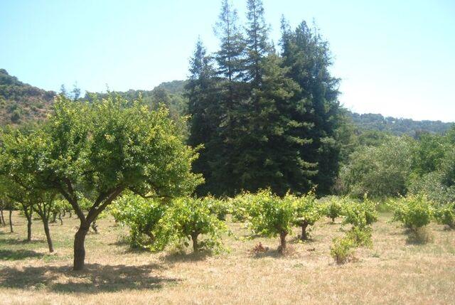 File:Fruit ranch.jpg