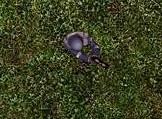 File:Purple1.jpg