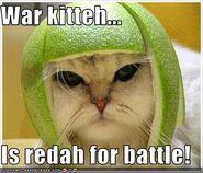 War kitteh