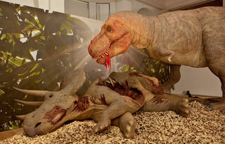 Trex-triceratops 73374 1