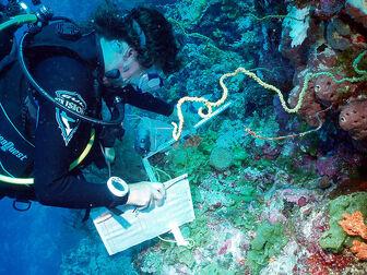 Sampling work in the Chagos