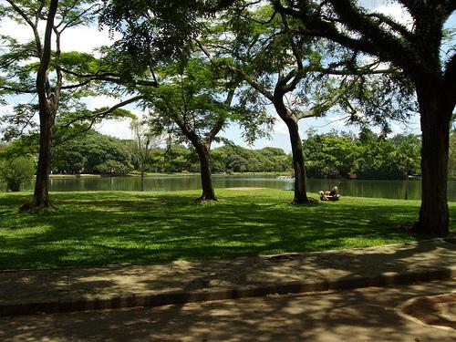 File:Ibirapuera park - São Paulo.jpg
