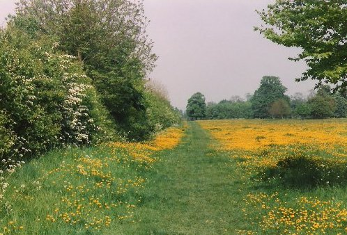 File:Countyrpark1.jpg