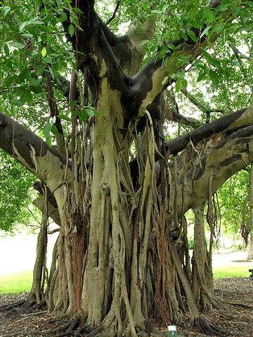 File:Botanical Gardens2.jpg