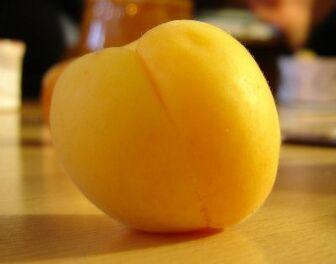 Apricot fruit1