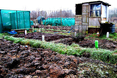 Allotment and shed