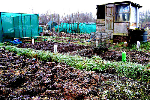 File:Allotment and shed.jpg