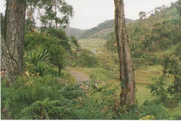 File:Bosque andino colombiano antioquia.jpg