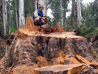 Brown Mountain stump