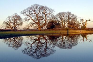 Winter oak reflections 02