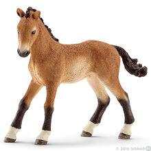 Tennesse Walker Foal 2016