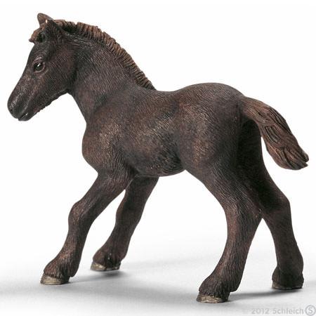 File:Camargue Foal.jpg