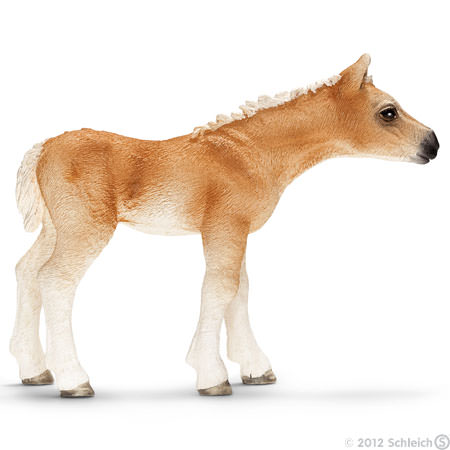 File:Haflinger Foal.jpg