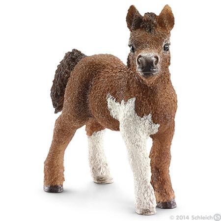 File:Shetland Foal-0.jpg