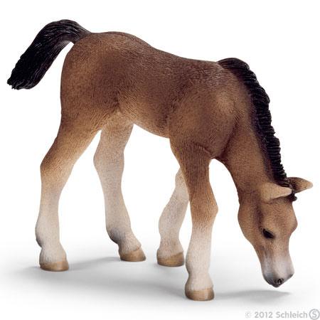 File:Arabian Foal, grazing.jpg