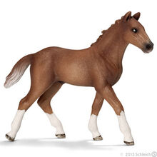Hanoverian Foal-0