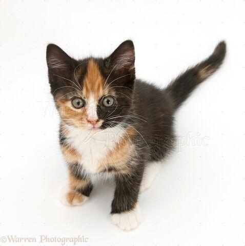 File:Me as a kitten.jpg