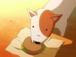 Imadori dog