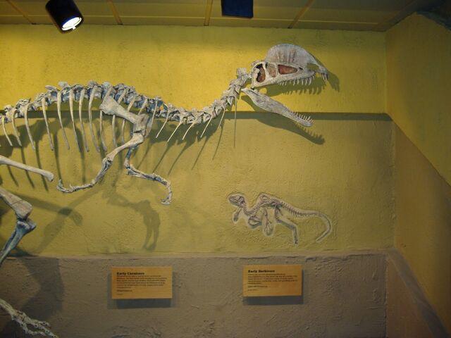 File:Dilophosaurus Skeleton.jpg
