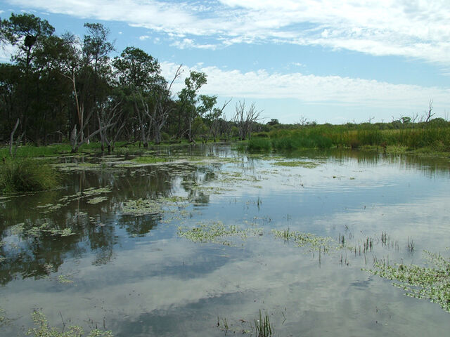 File:Wetlands.jpg