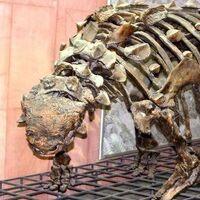 "Ankylosaurus (""Fused Lizard"")"